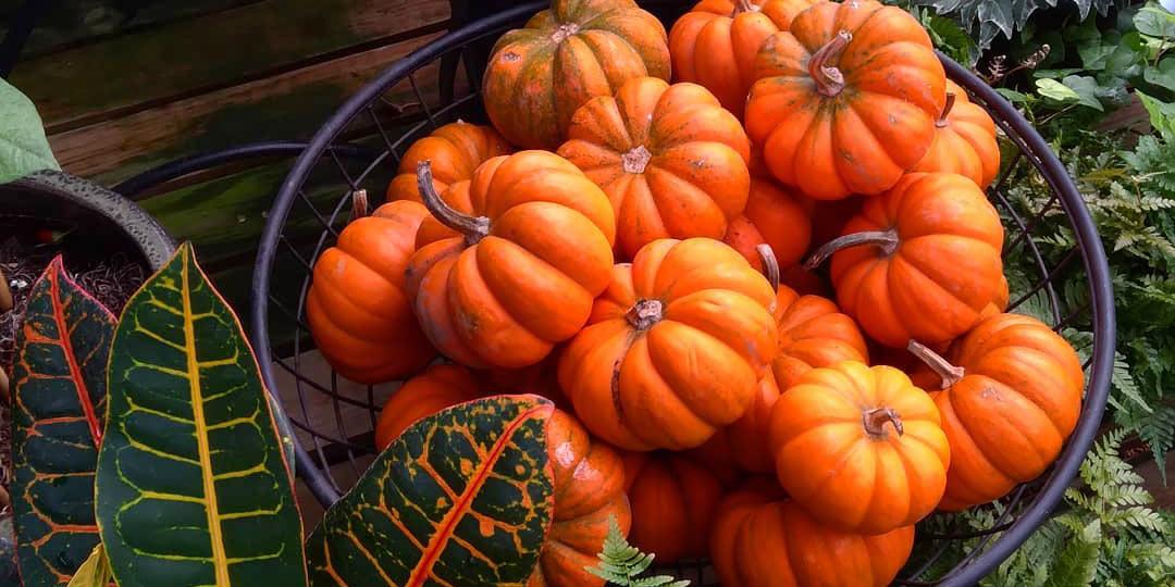 Add Fall decor like pumpkins!